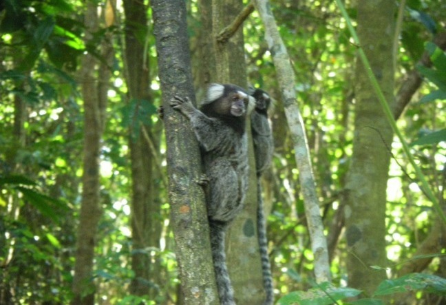 Tours with Monkeys and Wild Life at Tijuca Forest National Park. Book Now!
