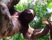 Floresta da Tijuca -Parque Nacional da Tijuca (Parna Tijuca ou PNT) protege a maior floresta urbana do mundo. Clique Aqui!